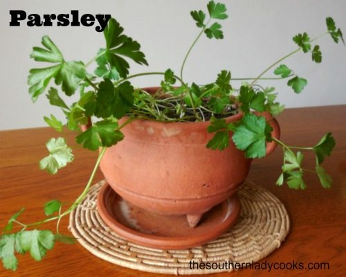 PARSLEY, IT'S NOT JUST A GARNISH!